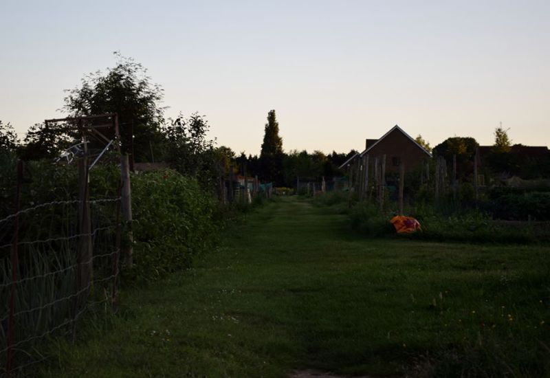 view across allotments
