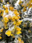 frozen winter flowers